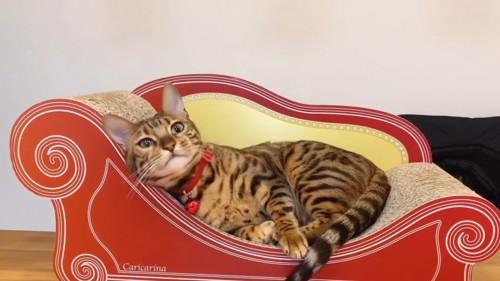 爪とぎソファーに横たわる猫