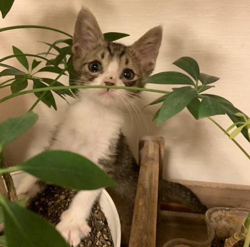 植木に興味を持つ子猫