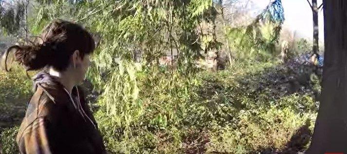 木の上のダービー