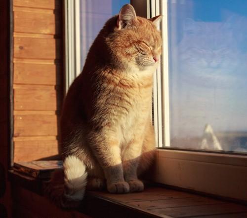 窓辺で日なたぼっこして目を閉じる猫