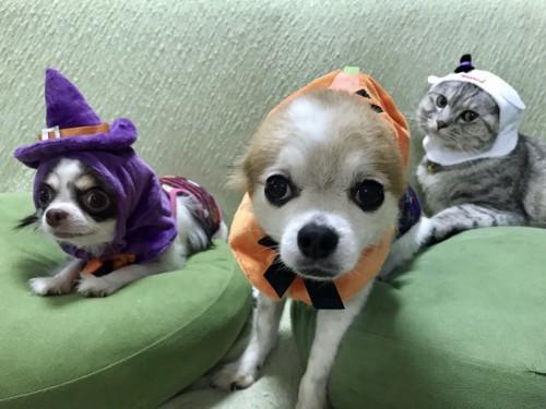 犬2匹と猫1匹