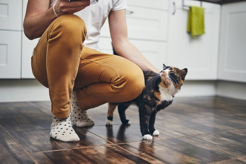足元にいる猫