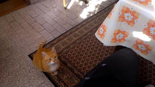 何かを狙う猫