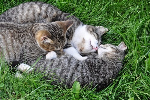 草原で寝る猫