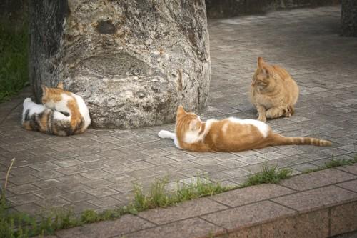 くつろぐ野良猫たち