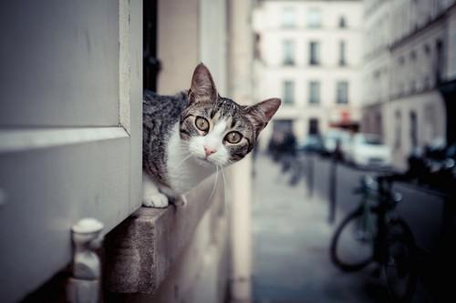 建物の間から顔を出す猫