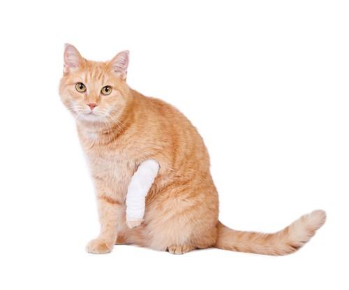 前足に包帯を巻いている猫