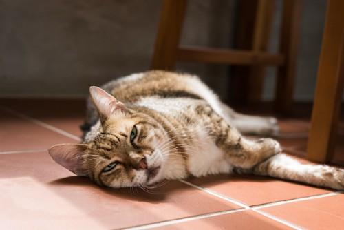 不機嫌そうな顔で寝転んでいる猫