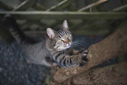 木に登る猫