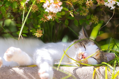 幸せそうに眠る猫