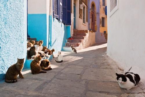 街にたくさんいる野良猫たち