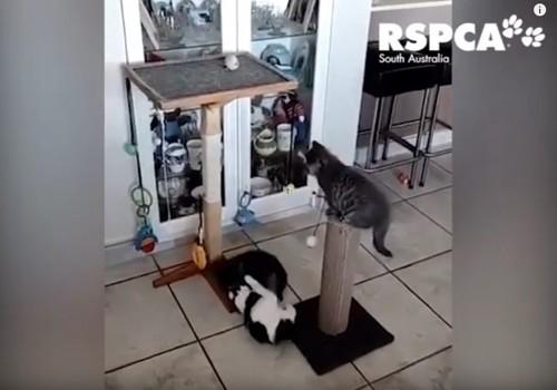 キャットタワーで遊ぶ3匹の猫