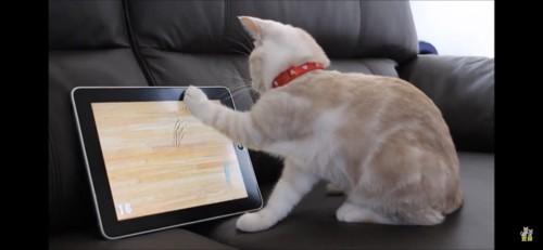 ipadに猫パンチする猫