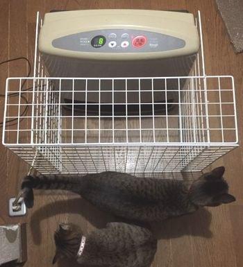 ストーブの前に猫たちがいる。(ストーブは奥に写っている)