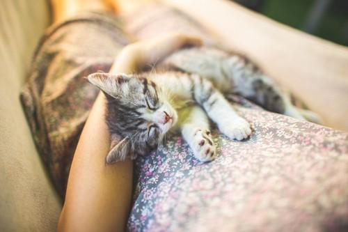 人の膝の上でリラックスする猫