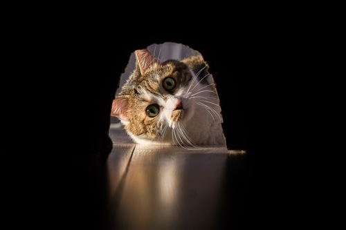 穴を覗く猫
