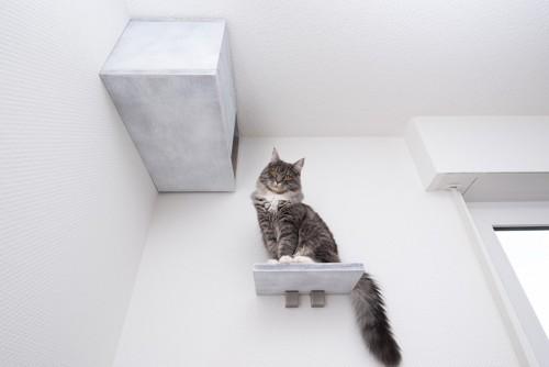 キャットステップに座って見下ろす猫