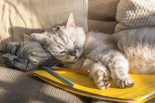 ペンケースを枕にして寝ている猫