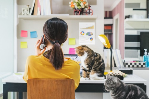 電話をする人と二匹の猫