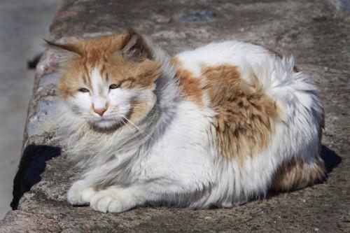 風に吹かれる毛がボサボサの猫