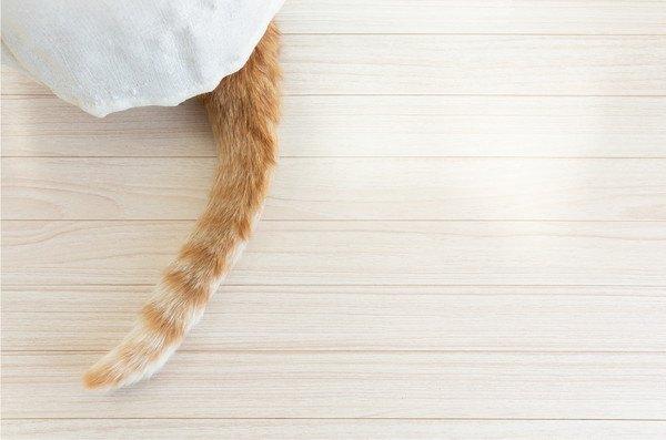 布のすき間から猫のしっぽ