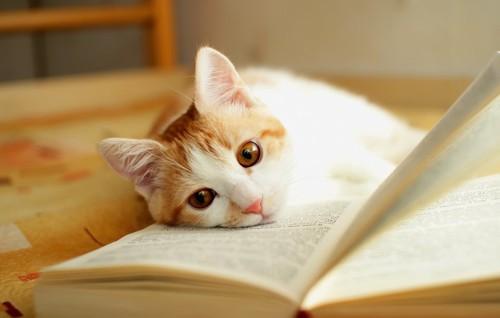 広げた本の上に寝転ぶ猫