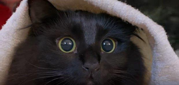瞳孔が開いたアウルキティ