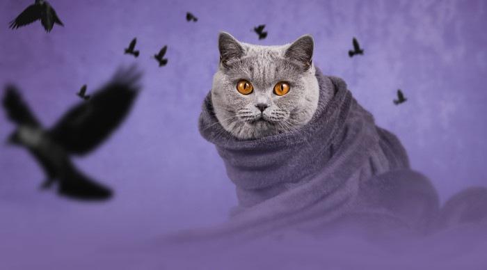 紫背景の猫とカラス