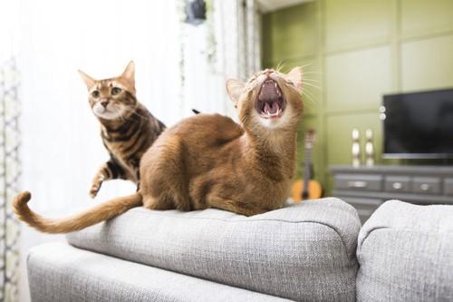 テレビの前であくびする猫
