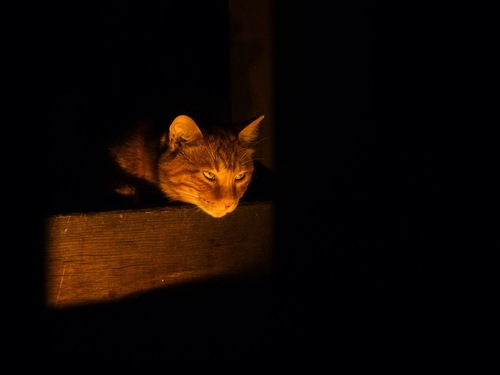 暗い部屋で箱の中に入っている猫