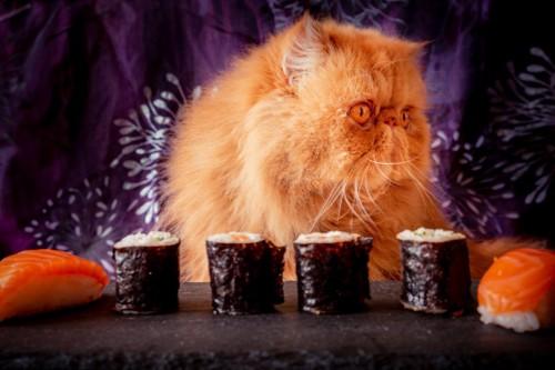 お寿司を前にした猫