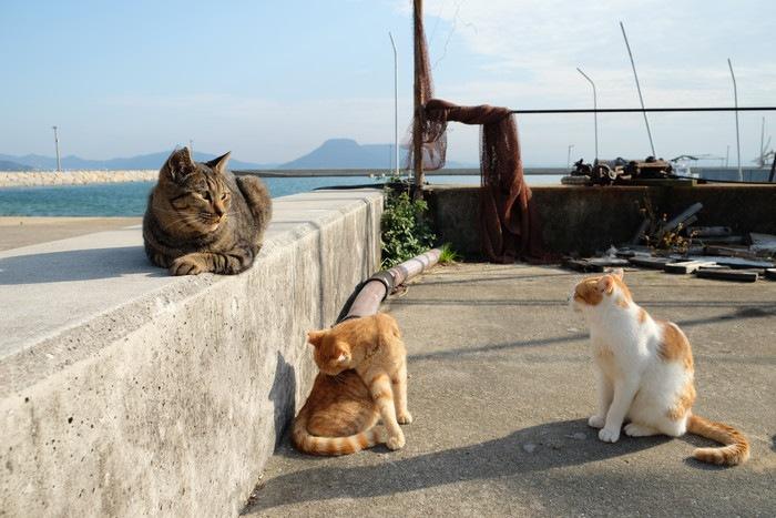 三匹の野良猫