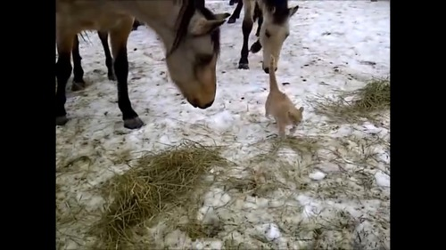後をついてくる馬