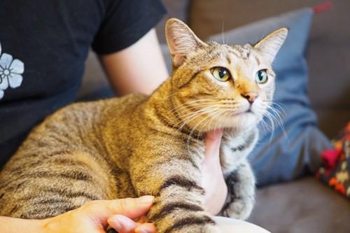 飼い主さんのお出かけを阻止する猫
