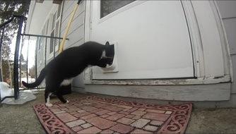 キャットドアに手を突っ込む猫