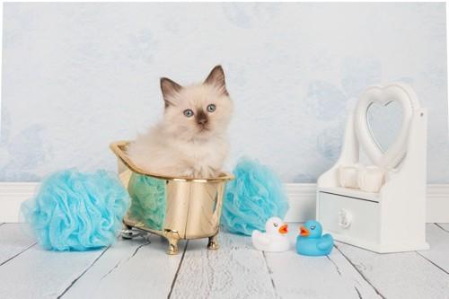 金色の小さなバスタブに入っている猫とドレッサー、あひるのおもちゃ