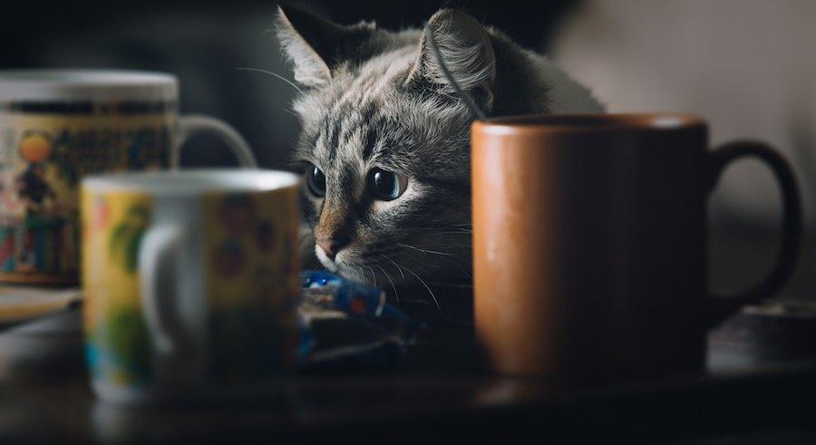 まじまじとグラスを見つめる猫