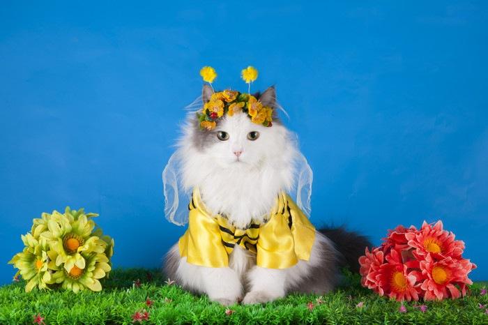 蜂のコスプレをしている猫