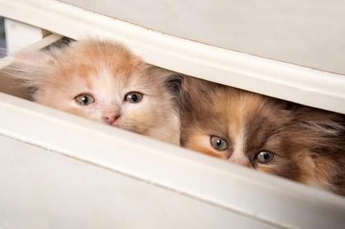 収納に入る猫