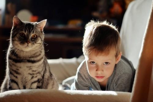 子供の隣にいる猫
