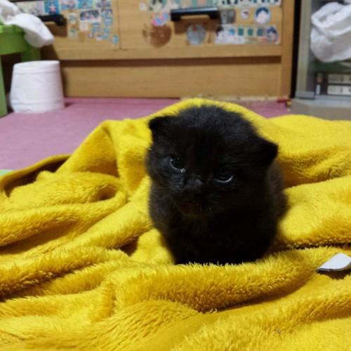 黒猫のごんすけ
