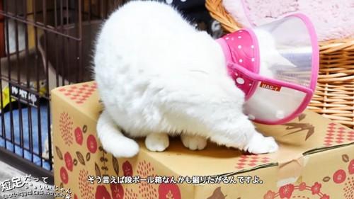 ダンボールを片手で掘る猫