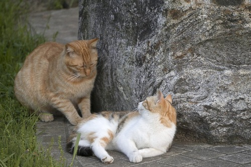 アプローチする猫