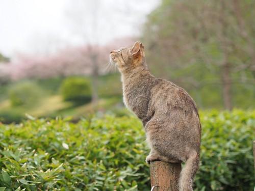 空を見つめる猫