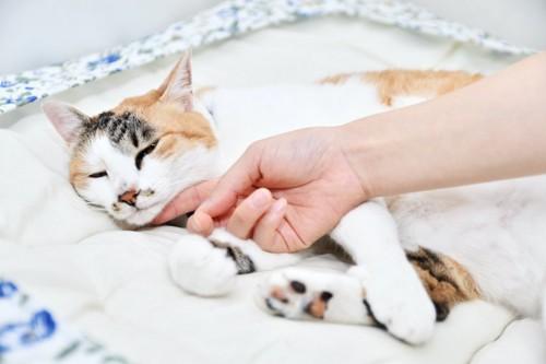 寝ている猫の顎を撫でる人の手