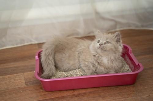 トイレにしゃがむ猫