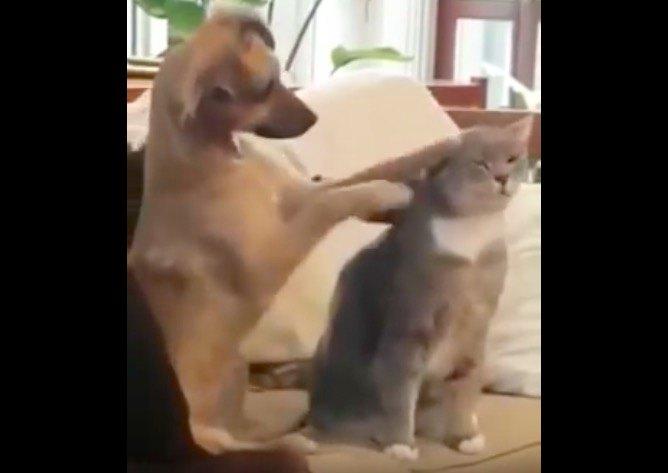 両手で撫でる犬