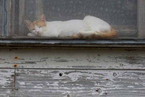 網戸とくつろぐ猫