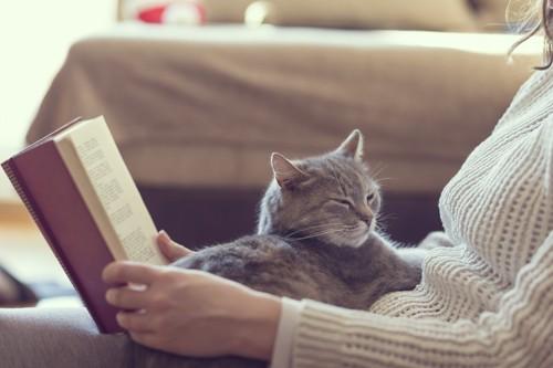 本を読む飼い主の膝に乗る猫