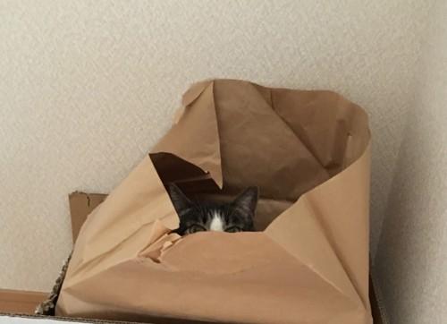 監視する猫